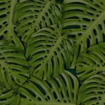 Tropische palm voor buiten terras